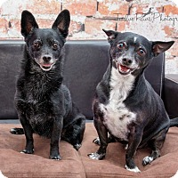 Adopt A Pet :: Larry and Pepper - Apache Junction, AZ