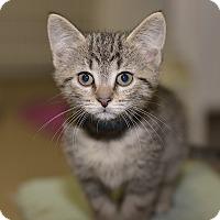 Adopt A Pet :: Marley - Medina, OH