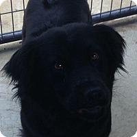 Adopt A Pet :: BRIDGET - Coudersport, PA