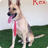 German Shepherd Dog Dog for adoption in San Diego, California - Rex