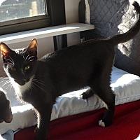 Adopt A Pet :: Felix - Manning, SC