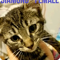 Adopt A Pet :: DIAMOND - Glendale, AZ