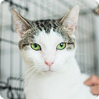 Adopt A Pet :: Beetlejuice - Los Angeles, CA