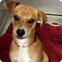 Adopt A Pet :: Keoni - Show Low, AZ