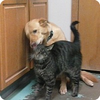 Adopt A Pet :: Tigger - Chewelah, WA
