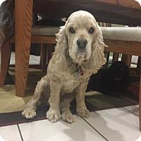 Adopt A Pet :: Buffy - Livonia, MI