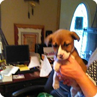 Adopt A Pet :: Roxie - Tiptonville, TN