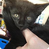 Adopt A Pet :: Prince - Staten Island, NY