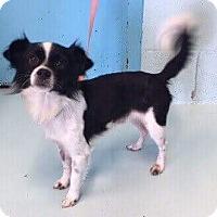 Adopt A Pet :: Bubba - Gilberts, IL