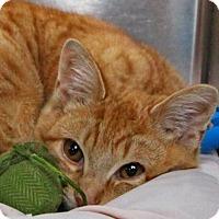 Adopt A Pet :: Phoenix - Stanhope, NJ