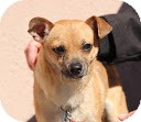 Chihuahua Mix Dog for adoption in Tinton Falls, New Jersey - Lucky Boy