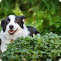 Adopt A Pet :: Angel - Tempe, AZ