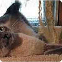 Adopt A Pet :: Mazarine - Davis, CA