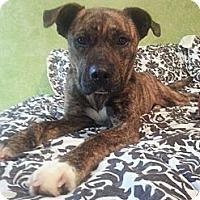 Adopt A Pet :: Rue - Hilliard, OH