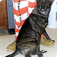 Adopt A Pet :: Willie - Washington Court House, OH