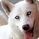 Adopt A Pet :: AURORA (video)