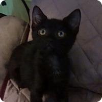 Adopt A Pet :: Mitzi - Mesa, AZ