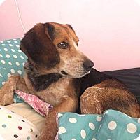 Adopt A Pet :: Milo - Howell, MI