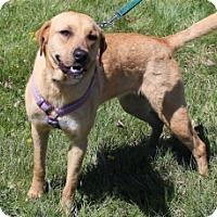 Adopt A Pet :: MARIGOLD - Albany, NY