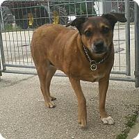Adopt A Pet :: Josie - Geneseo, IL