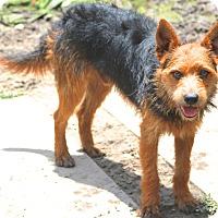 Adopt A Pet :: Bruce - Gentle boy - Norwalk, CT