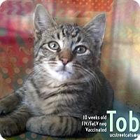 Adopt A Pet :: Tobie - Union City, NJ