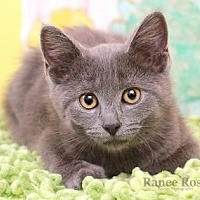 Adopt A Pet :: Kiara - Sterling Heights, MI