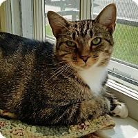 Adopt A Pet :: Tina Fey - Fairfax, VA