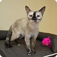 Adopt A Pet :: Trixie (Has Application) - Washington, DC