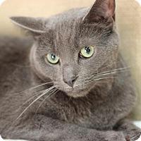 Adopt A Pet :: Smokey - $10! - Midland, MI