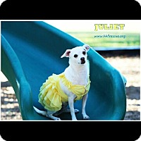 Adopt A Pet :: Juliet - Houston, TX