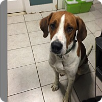 Adopt A Pet :: John Boy - Paterson, NJ