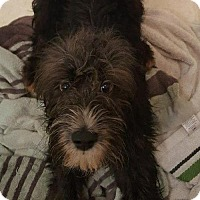 Adopt A Pet :: Dawson- ON HOLD - NO MORE APPLICATIONS - Baltimore, MD