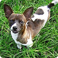 Adopt A Pet :: OMAR - Hollywood, FL