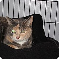 Adopt A Pet :: Wendy - Salem, OR