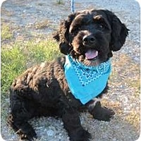 Adopt A Pet :: Georgie - Kingwood, TX
