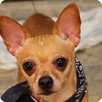 Adopt A Pet :: Zia - Mahopac, NY