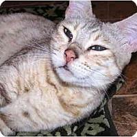 Adopt A Pet :: Italy - San Ramon, CA
