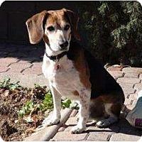 Adopt A Pet :: Arby - Phoenix, AZ