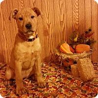 Adopt A Pet :: Bizzie - Lima, OH
