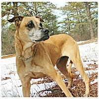 Adopt A Pet :: Reba - Forked River, NJ