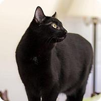 Adopt A Pet :: Dax - Greensboro, GA