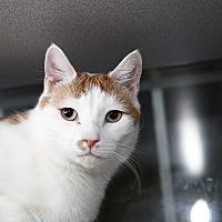 Adopt A Pet :: Sonny - Walden, NY