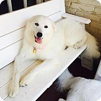 Adopt A Pet :: Anna Frozen - Kyle, TX