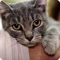 Adopt A Pet :: Pip - New York, NY