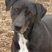Adopt A Pet :: Roo - Shelbyville, TN