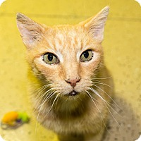 Adopt A Pet :: Dean-FEE WAIVED LIMITED TIME - Seville, OH
