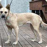 Adopt A Pet :: Elfie - Mt. Prospect, IL