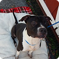 Adopt A Pet :: Kain - Houston, TX