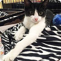 Adopt A Pet :: Sonya - Boca Raton, FL
